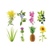 Набор картриджей для умного сада Click and Grow «Экспериментальный» (комплект — 3 шт.)